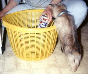 Gus checks out a beer in the laundry basket