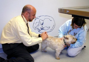 Dr. Mark Hanks giving Gus an acupuncture treatment