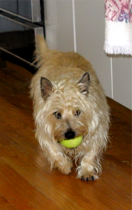 Playing Tennis Ball with Gus