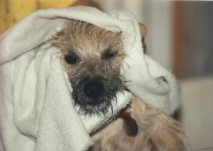 Gus as a puppy - first bath