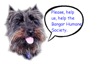 Dulcie - Please help us, help the Bangor Humane Society