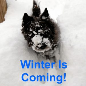 Dulcie - Winter is coming!