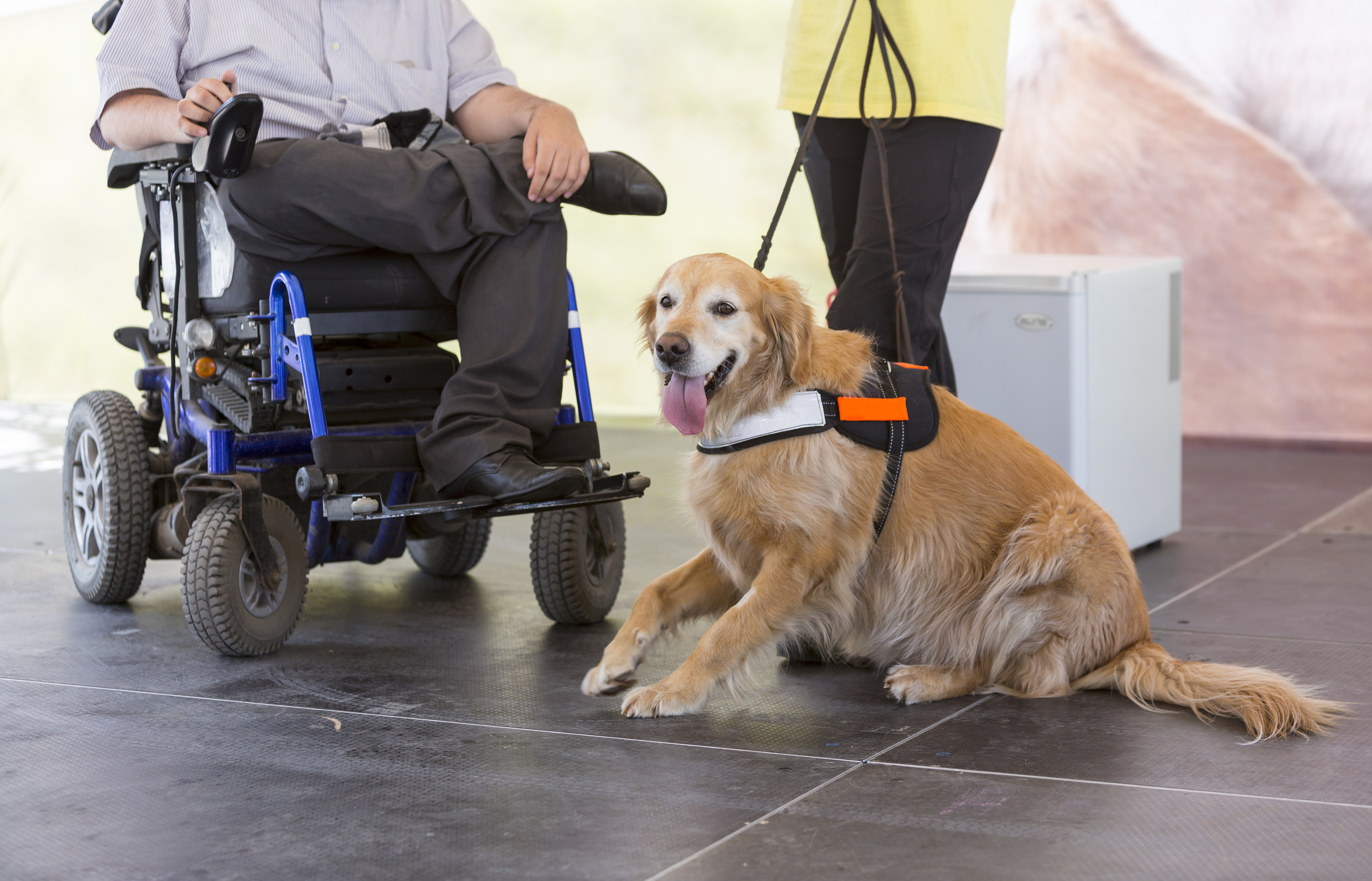 Service assistance and therapy dogs what is the difference mobility assistance dog xflitez Images