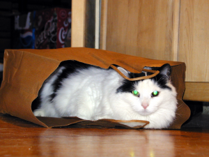 Our cat Tyler enjoying some time alone in a bag.