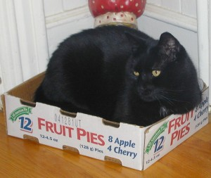 Batmanin A Pie Box