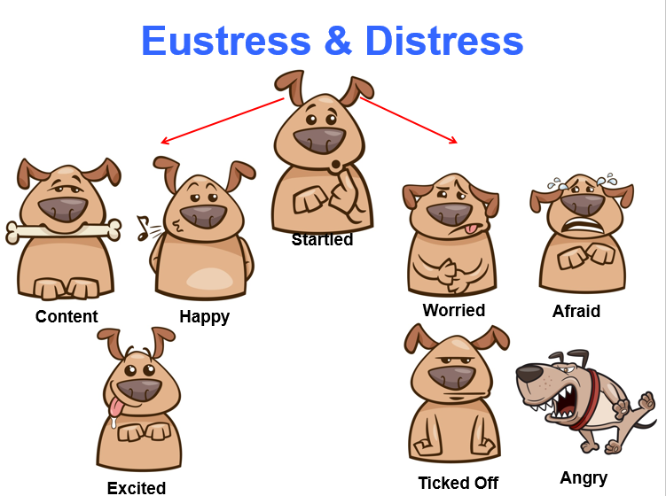 Eustress and Distress