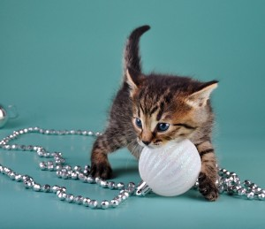 Kitten w-ornament