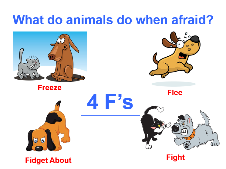 What Do Animals Do When Afraid