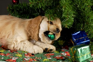 puppy chewing ornament