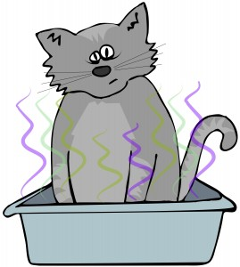Cartton Cat in Litterbox-canstockphoto10613617