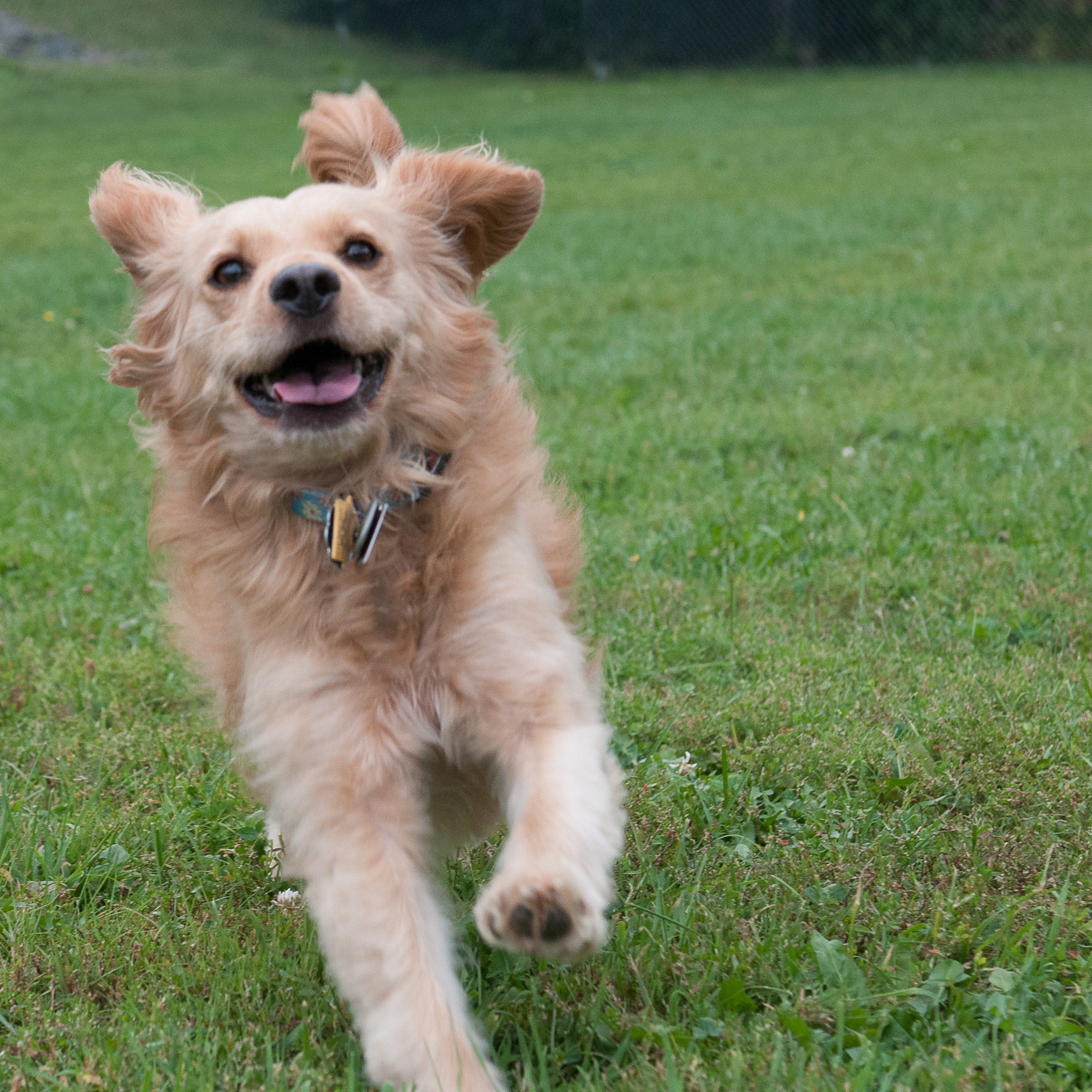 helping paws-maine – green acres kennel shop blog