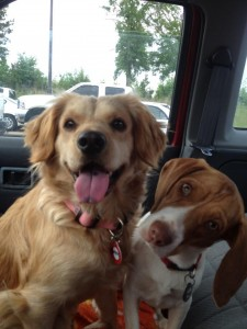 Muppy and Ernie on the way to Maine