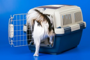 dog going in crate-canstockphoto3233849