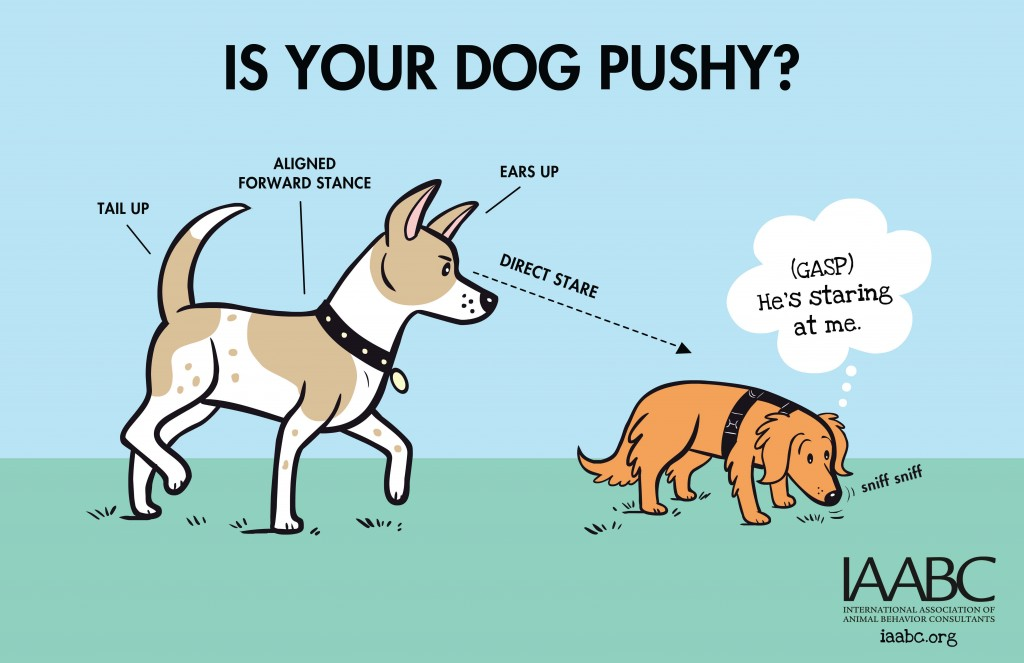 iaabc-dogpark-Is Your Dog Pushy