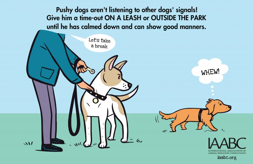 iaabc-dogpark-Is Your Dog Pushy-2