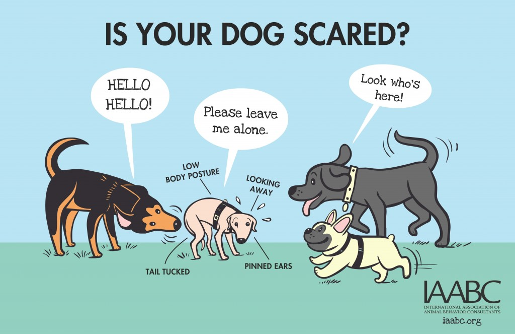 iaabc-dogpark-Is Your Dog Scared