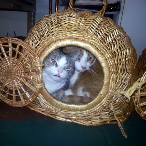 Snuggling in the basket