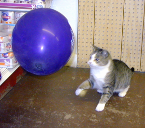 Practicing martial arts with a balloon