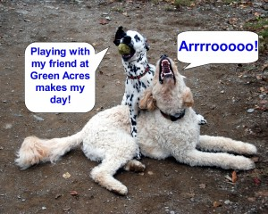 Playing with my friend at Green Acres makes my day -color- 1000x800