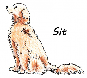Sit, color copy-witht text