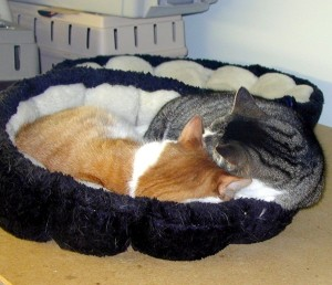 Snuggling with sister - Who needs two beds?
