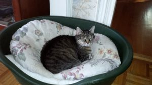Hanger Snoozing in Muppys bed-2014 1200x675