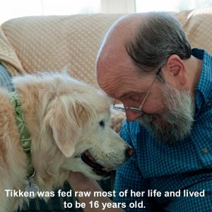 tikken-was-fed-raw-most-of-her-life-800x800
