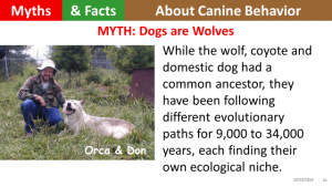 dogs-are-wolves