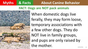 dogs-are-not-pack-animals