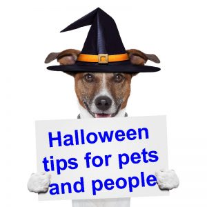 halloween-tips-for-pets-and-people-canstockphoto12289416-800x800