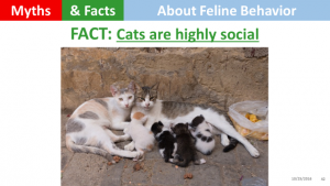 cats-are-highly-social