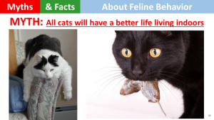 cats-are-not-better-off-indooors
