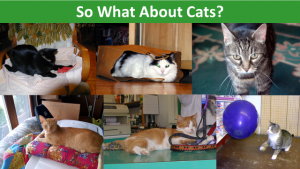 so-what-about-cats