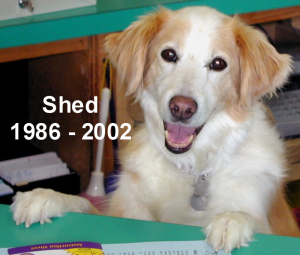 shed-at-counter-newsletter