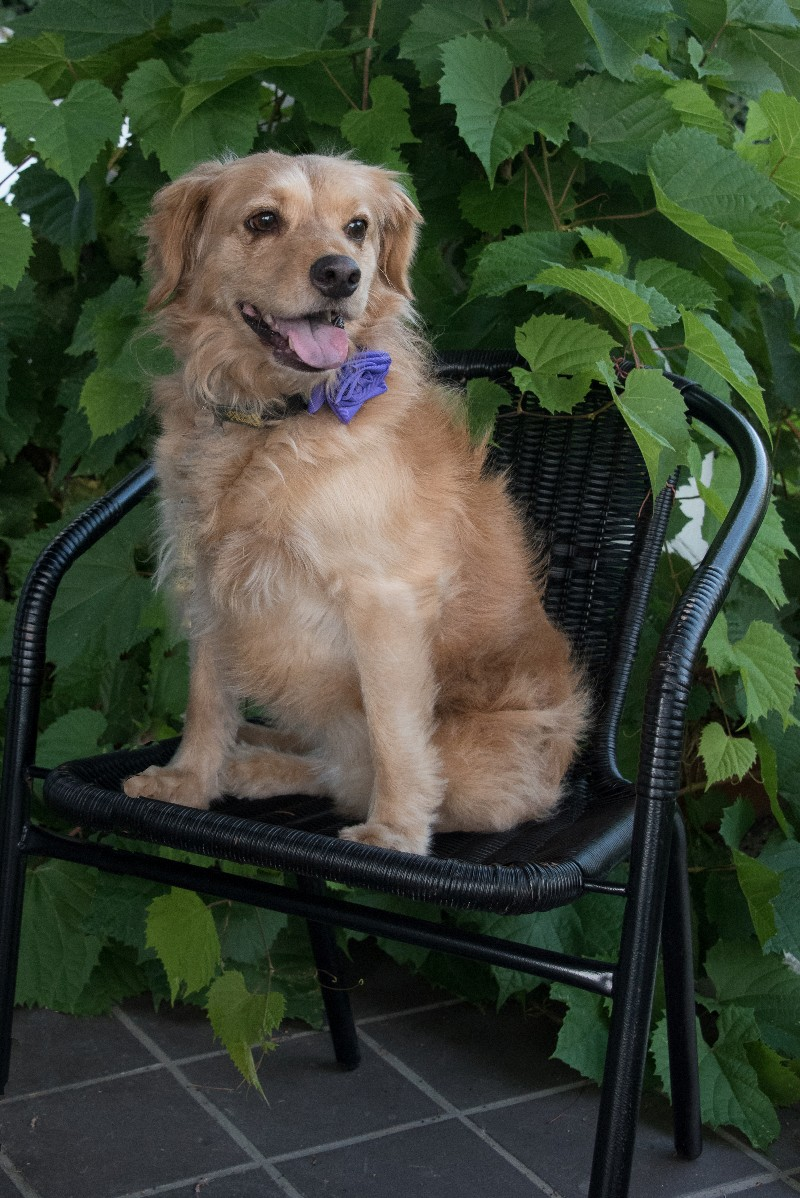 Dog green acres kennel shop blog these are two breeds with fundamentally different temperaments and you may not know which will be the predominant personality until you have lived with the nvjuhfo Gallery