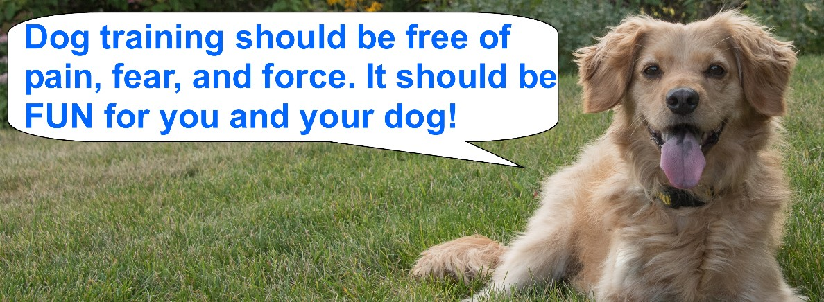 Content Our disposable, instantaneous gratification culture and its particular cost on dogs