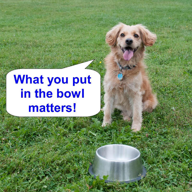 pet nutrition what should i feed my pet green acres