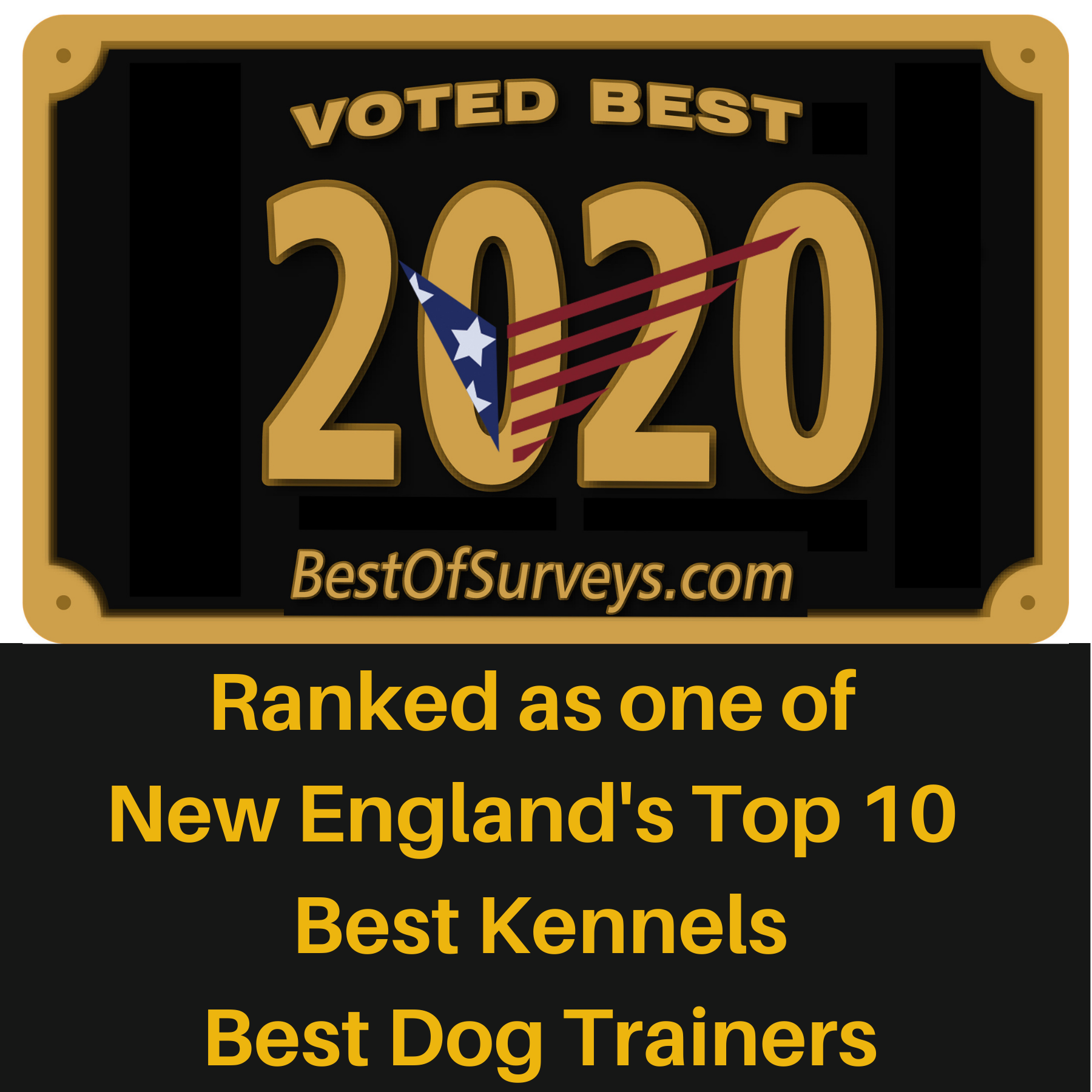 Best of Surveys 2020