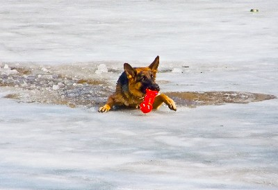 dog broken through ice-canstockphoto15483120 400x274