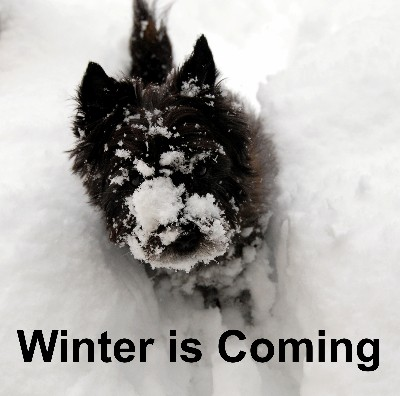 dulcie-winter is coming 400x396