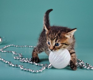 kitten w-ornament-canstockphoto16651514 300x258