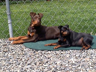 Gracie and Zeus sunning-Robert Clark-small